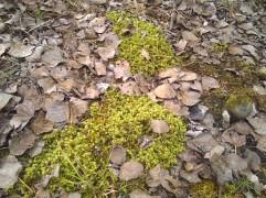 moss, leaves