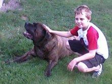 mastiff, dog, boy