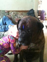 mastiff, child,