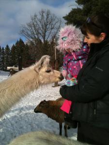 llama, funny farm