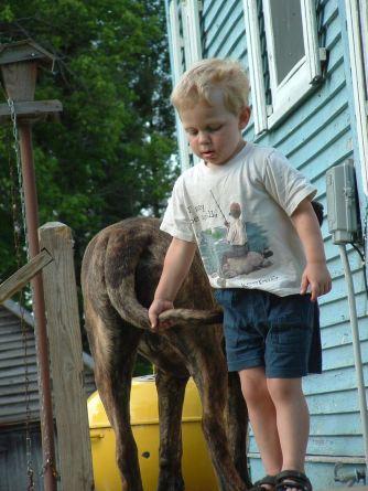 mastiff, child, kid