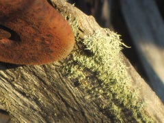 lichen, antique mower