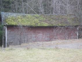 roof, moss