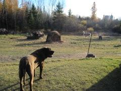 Stinky Herd
