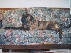 mastiff, couch