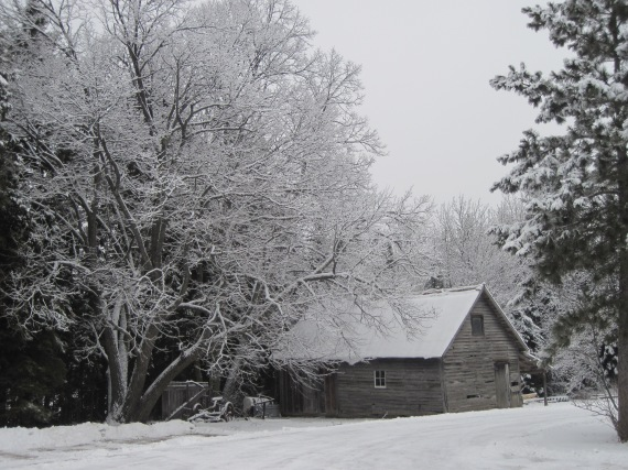Basswood, linden, woodshed, the funny farm