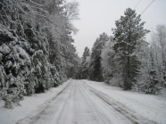 snowy road, snowy trees
