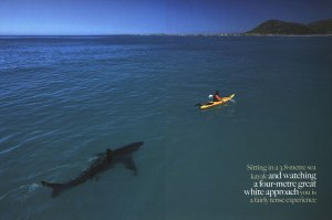 Shark, kayak