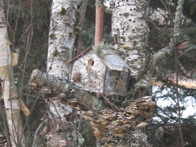 birch bark, birdhouse