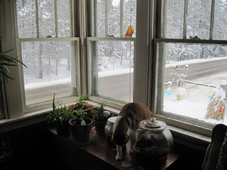 window, snow, cat, houseplants