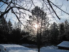 hoar frost, norway pine, sunrise, mn, winter, pajari girls