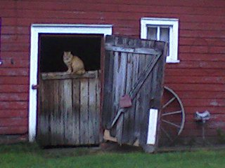 farm, barn, cat