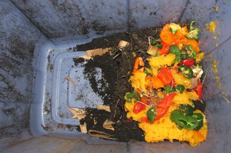 worms, vermiculture, compost, recycle, fertilizer