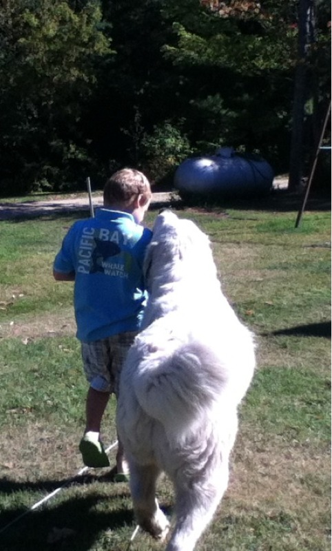 great pyrenees, dog, boy, farm