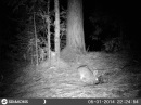 Trail Cam Rabbit 001