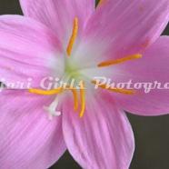 Flower-120
