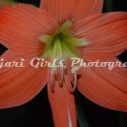 Flower-175