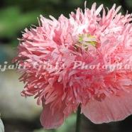 Flower-395