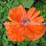 Flower-402