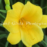 Flower-439