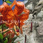 Flower-443