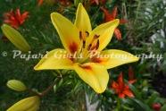 Flower-462