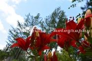 Flower-498