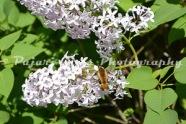 Flower-536