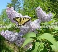 Flower-638
