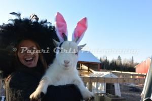 Goats in Ears-3