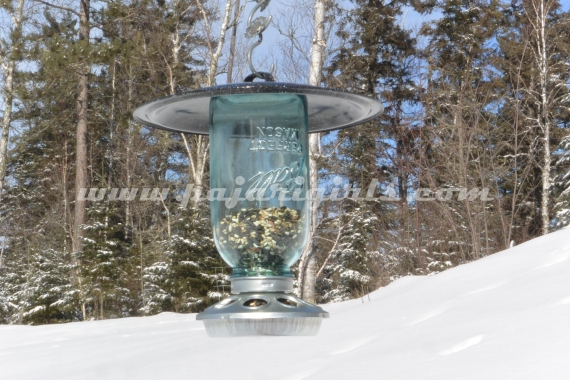 Bird Feeders (26 of 39)